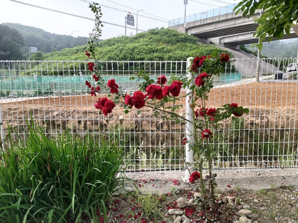 사본 -꽃5.png