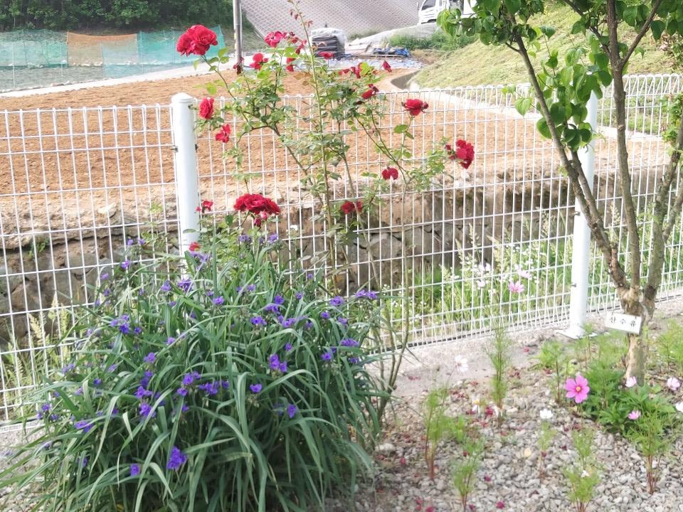 사본 -꽃3.png